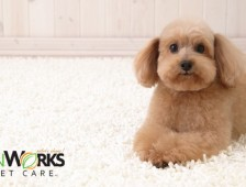 When to use a professional carpet cleaning service to remove pet stains